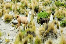 All Peru